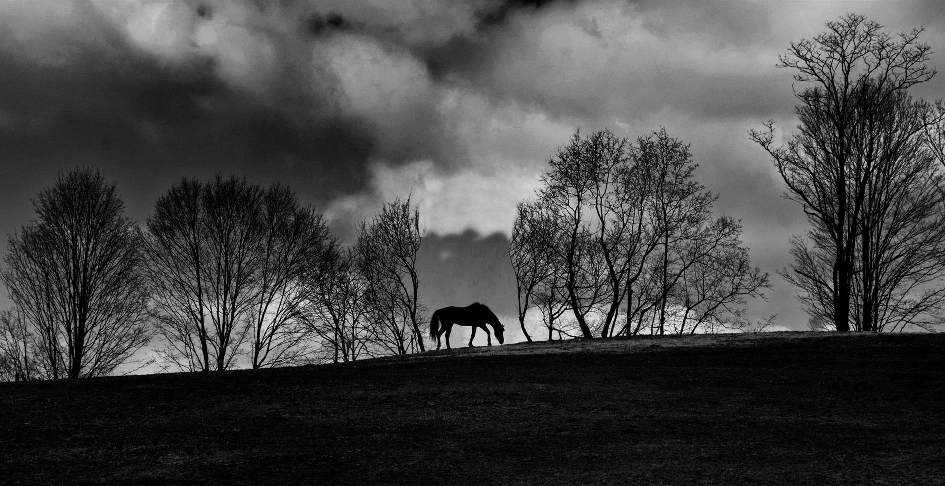 Horse on the Ridge
