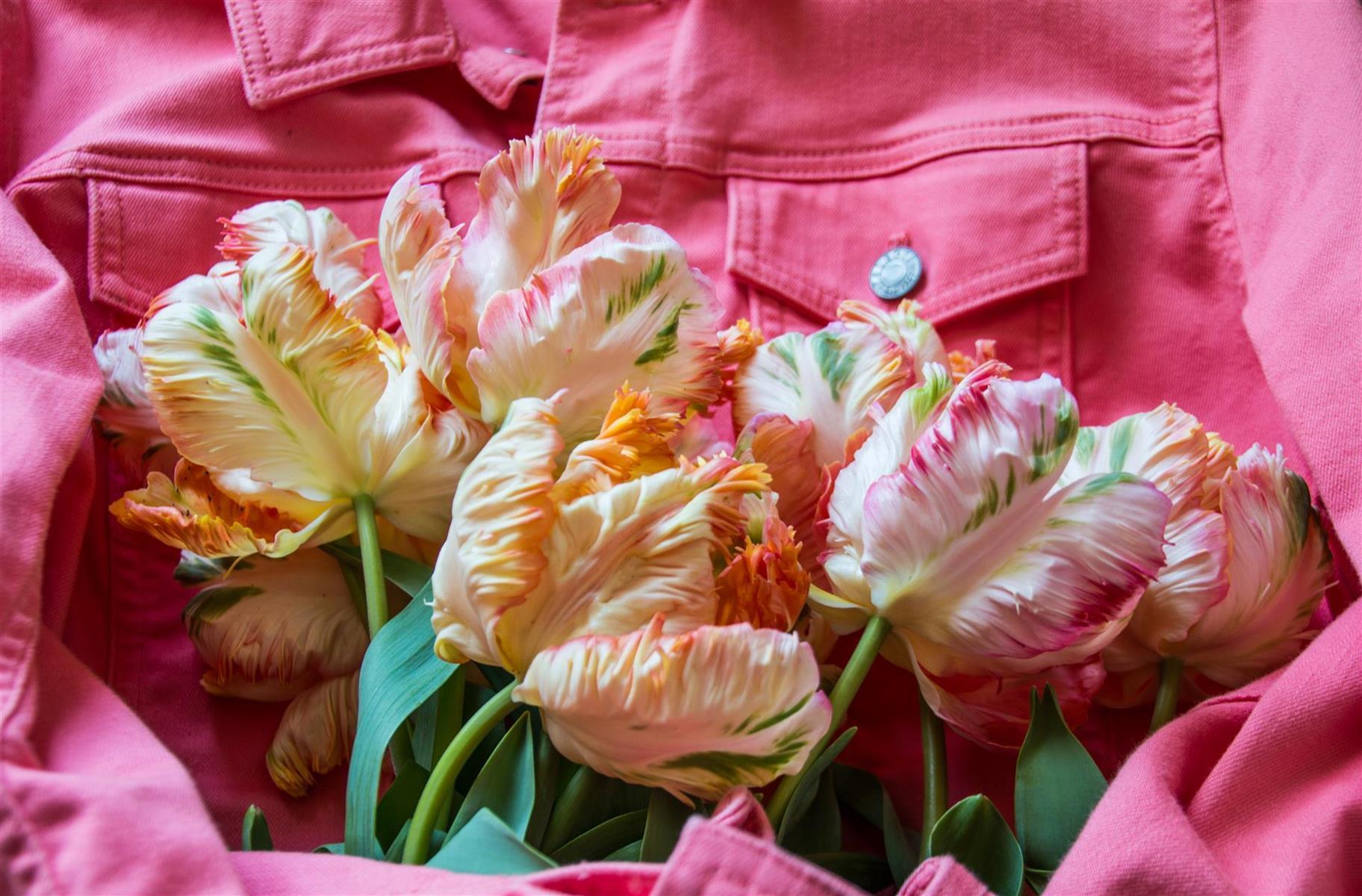 Armful of Tulips